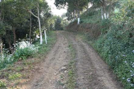 pathway, durtlang, mizoram