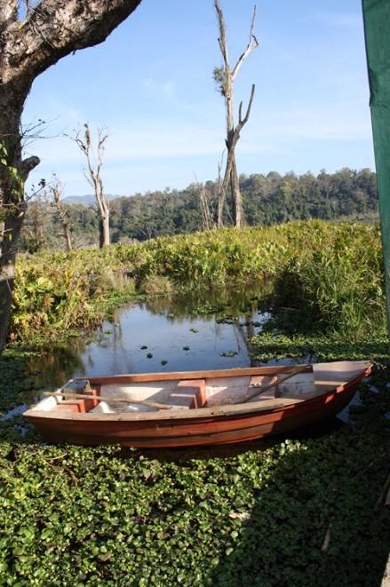Palak Dil, boat