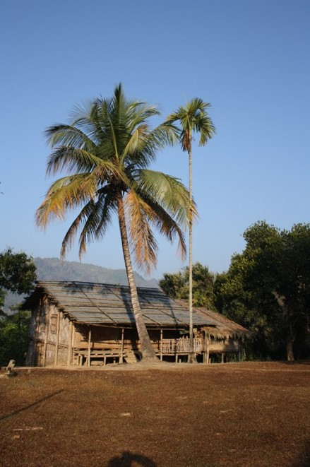 Under the coconut tree, Phura village in South Mizoram.