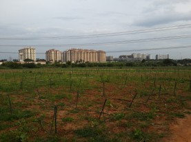 cycling-whitefield-bangalore-05