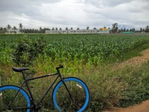 cycling-whitefield-bangalore-11