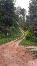 The road leading to Ganesh Estate Homestay, Madikeri