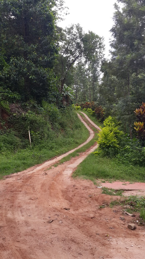 The road leading to Ganesh Estate Homestay, Madikeri