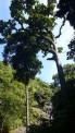 Irupu Falls,Coorg