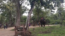 Elephant ride, Nisargadhama
