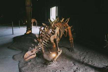 skelatal-dinasaur